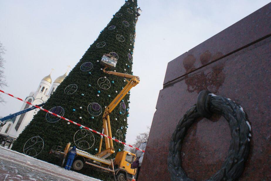В Калининграде начали разбирать главную ёлку города - Новости Калининграда