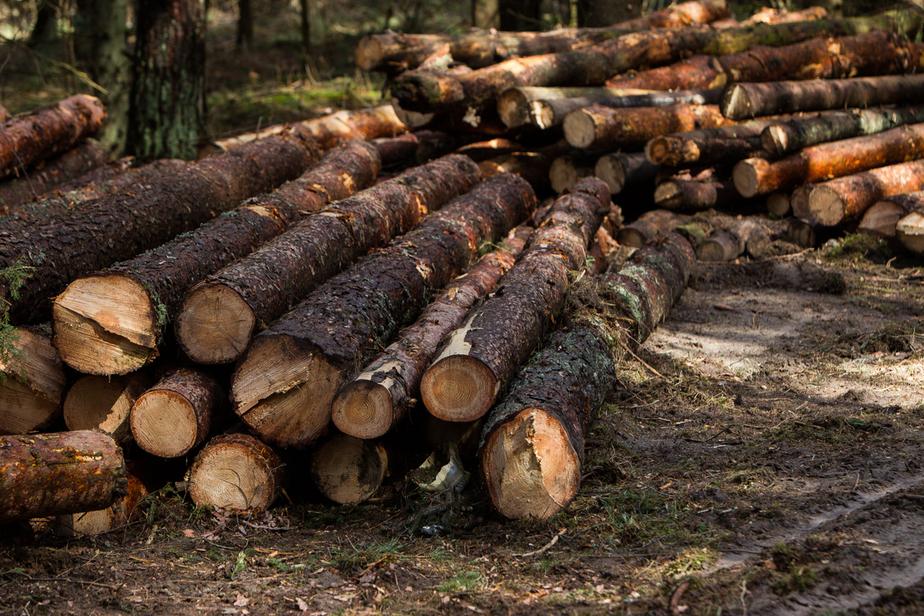 В Калининградской области начнут сертифицировать древесину