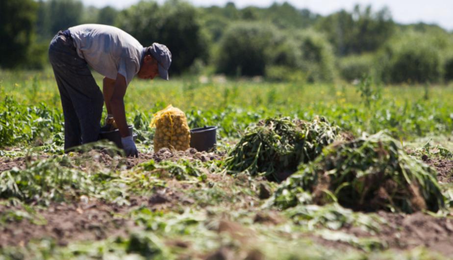 Польские аграрии страдают от засухи  - Новости Калининграда