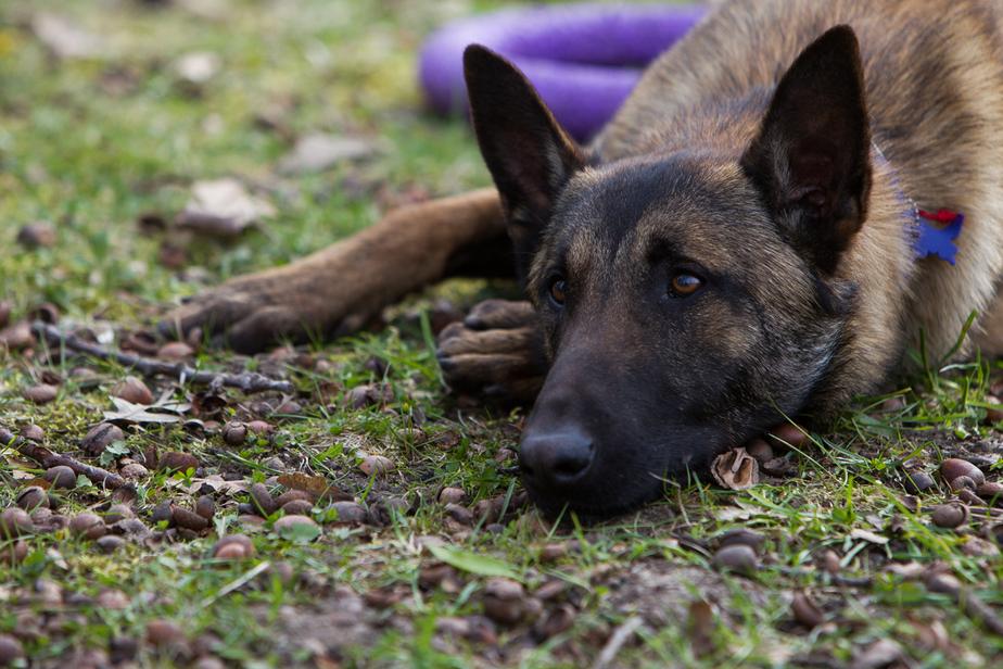 Калининградскому приюту для бездомных животных нечем кормить питомцев - Новости Калининграда