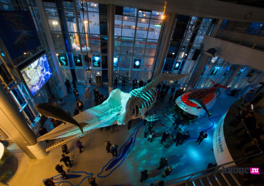 В Музее Мирового океана покажут 60-килограммовое сердце серого кита и скелет кашалота