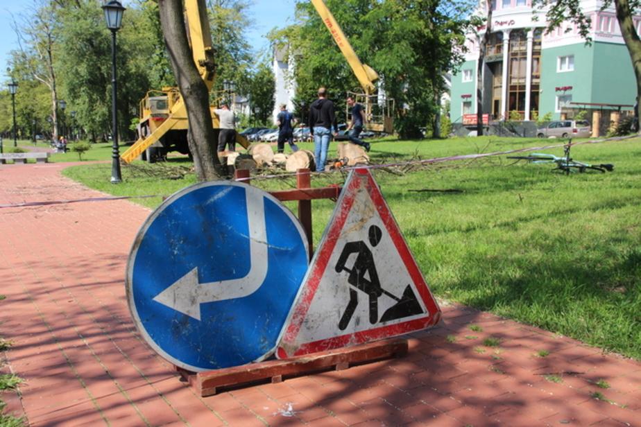 На Верхнем озере вырубят 34 дерева, два из них - неопределенной породы - Новости Калининграда