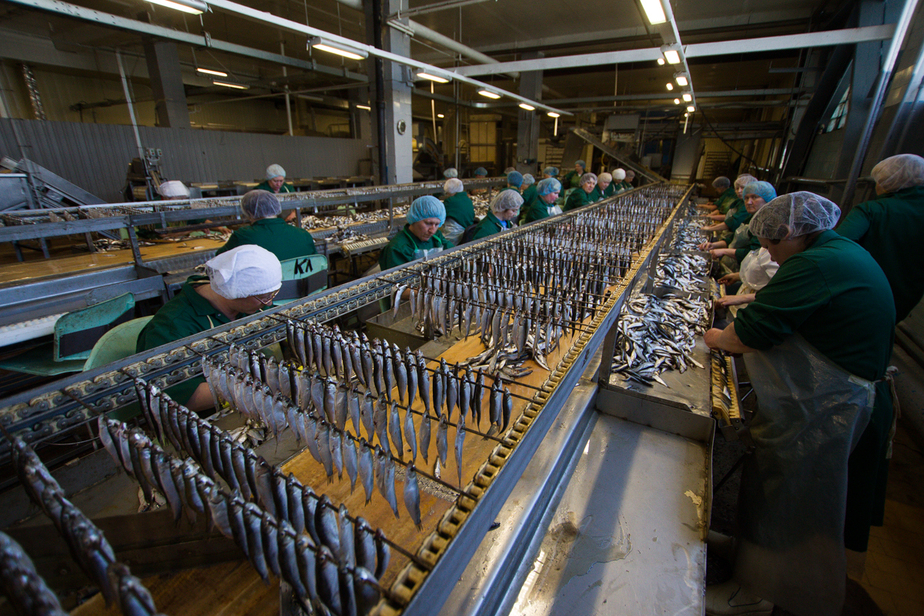 Moody's: импортозамещение в России не работает  - Новости Калининграда