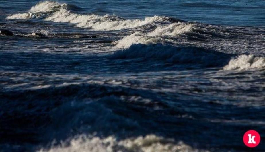 В Паланге сотни моржей искупались в ледяном море - Новости Калининграда