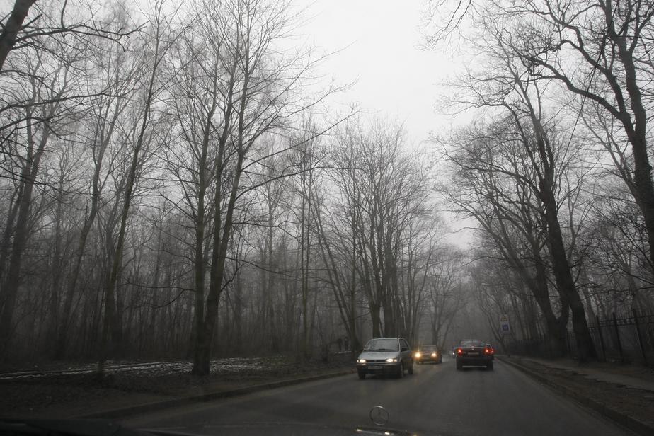 Калининградец уснул за рулём и врезался в дерево - Новости Калининграда