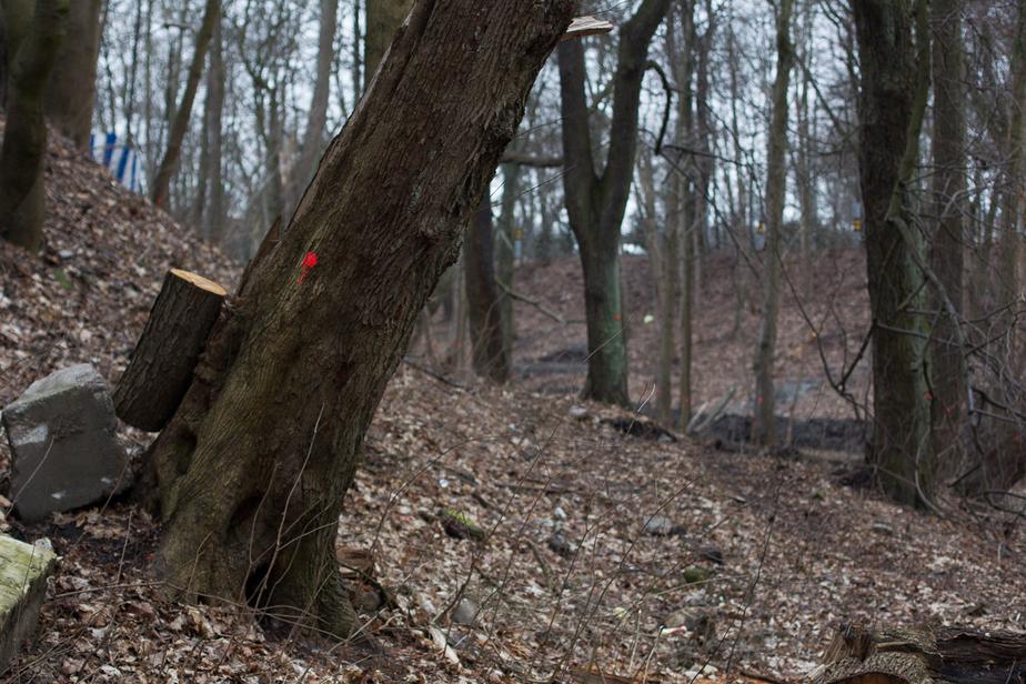В пос. Большаково обнаружили скелет женщины, следователи устанавливают личность  - Новости Калининграда