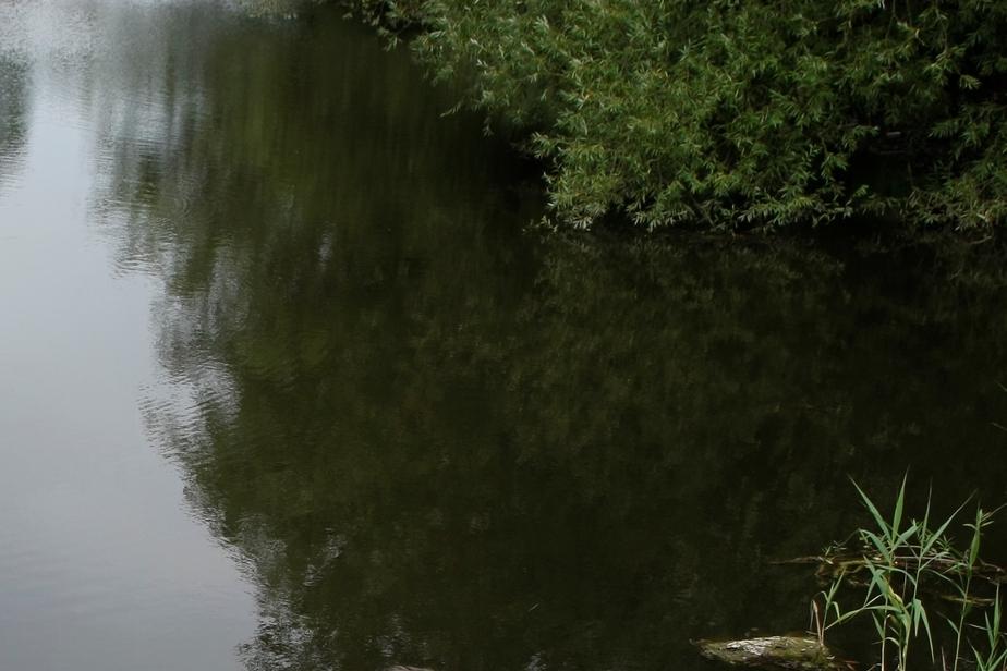 В Гурьевском районе прокуратура приостановила строительство пруда - Новости Калининграда