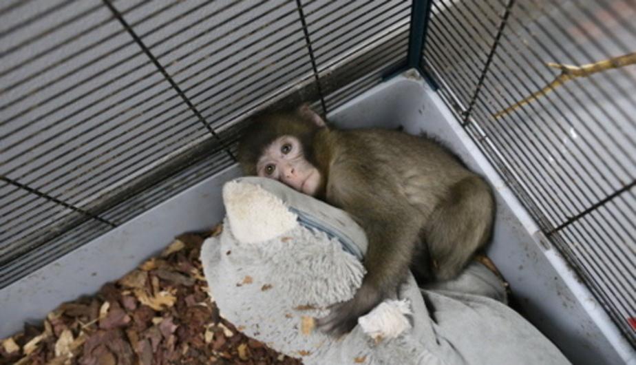 В Калининградском зоопарке за полтора месяца родились 30 детенышей - Новости Калининграда