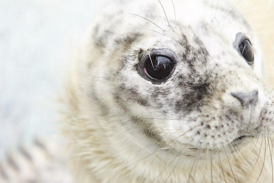 В зоопарке Калининграда рассказали, как живут новорождённые тюленята - Новости Калининграда