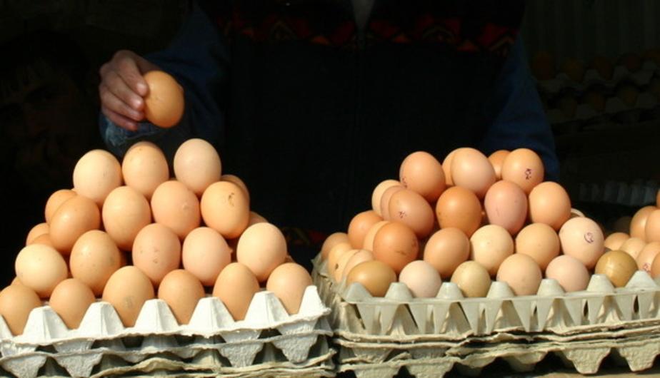 Калининградские куры снесли 103 миллиона яиц с начала года  - Новости Калининграда