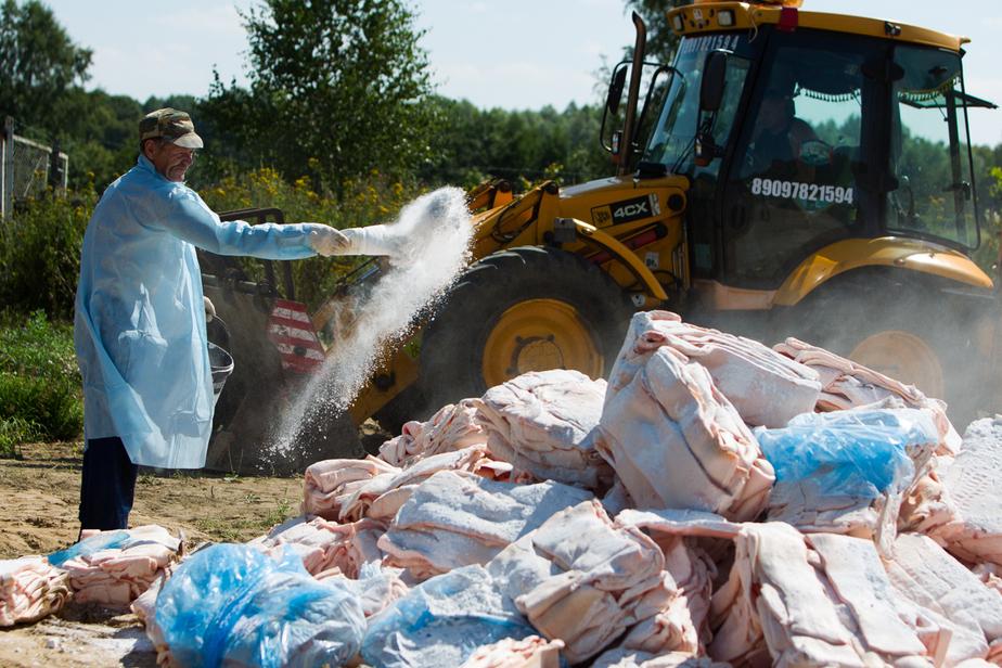 В России с августа уничтожено 1,8 тысяч тонн санкционной продукции - Новости Калининграда