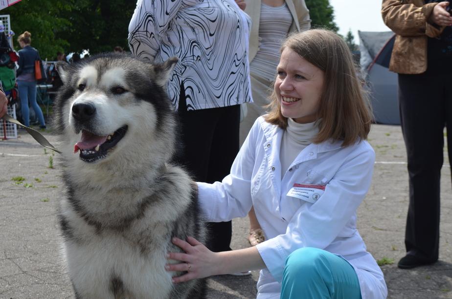 Калининградские ветврачи рассказали, могут ли домашние животные заразиться свиным гриппом  - Новости Калининграда