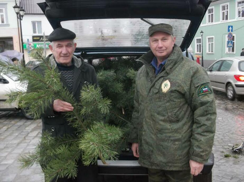 Лесное агентство бесплатно раздаёт еловые ветки на калининградских базарах - Новости Калининграда