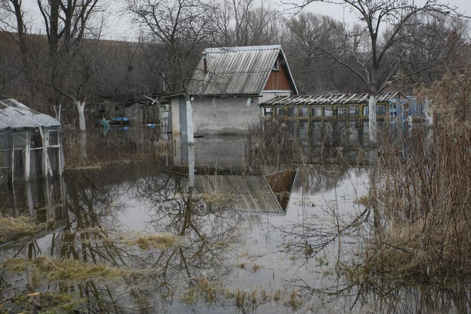 Калининградец уехал на дачу, чтобы покормить собаку, и замёрз насмерть - Новости Калининграда