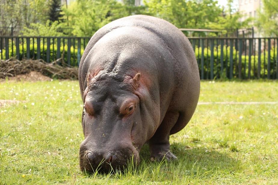 Карнавал животных: 25 июня в Калининградском зоопарке выступит симфонический оркестр - Новости Калининграда