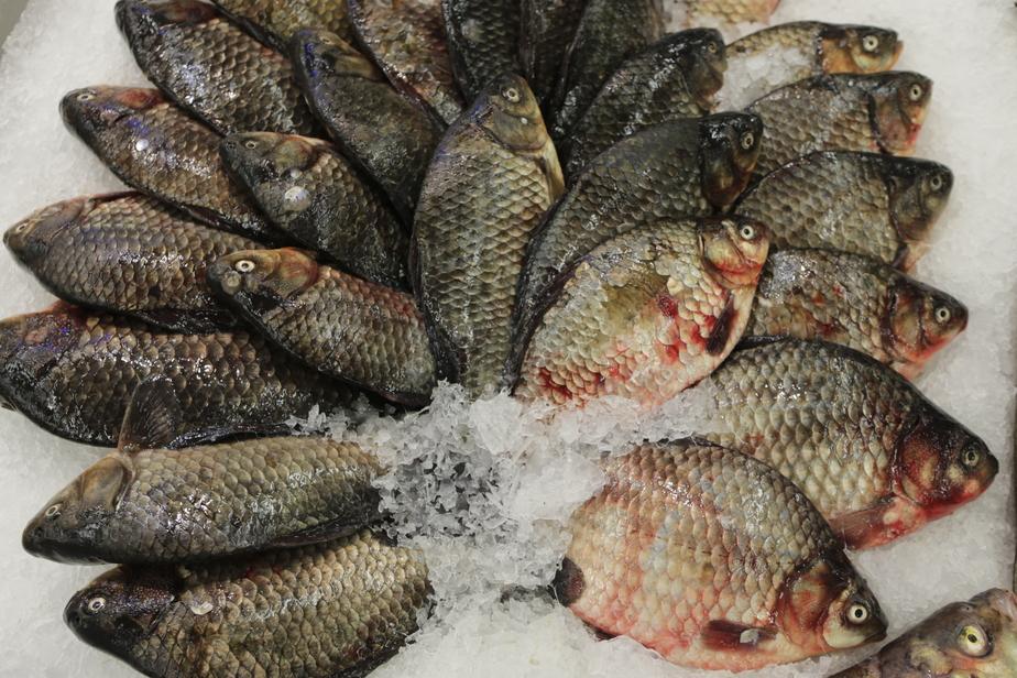 Калининградский суд закрыл на 70 суток рыбный магазин в жилом доме - Новости Калининграда