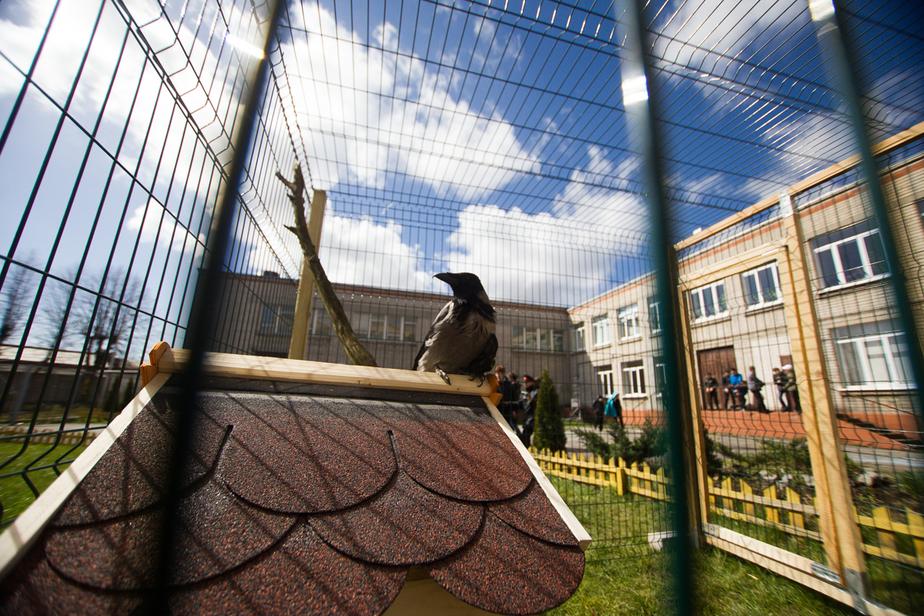 Минкульт: дети должны быть в школе до семи вечера  - Новости Калининграда