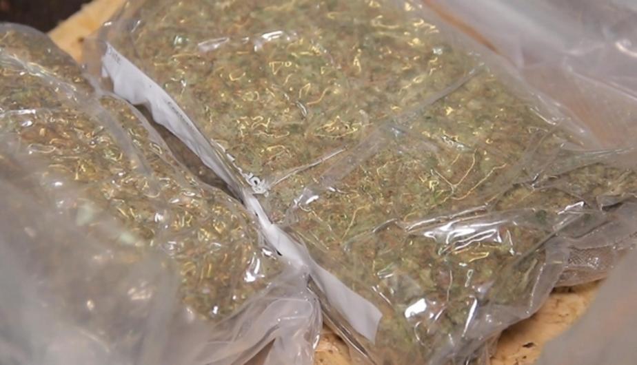 За полгода калининградские наркополицейские изъяли у нарушителей 20 кг марихуаны - Новости Калининграда