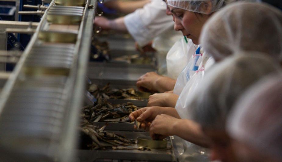 В сентябре Россельхознадзор проверит рыбные заводы Литвы и Польши - Новости Калининграда