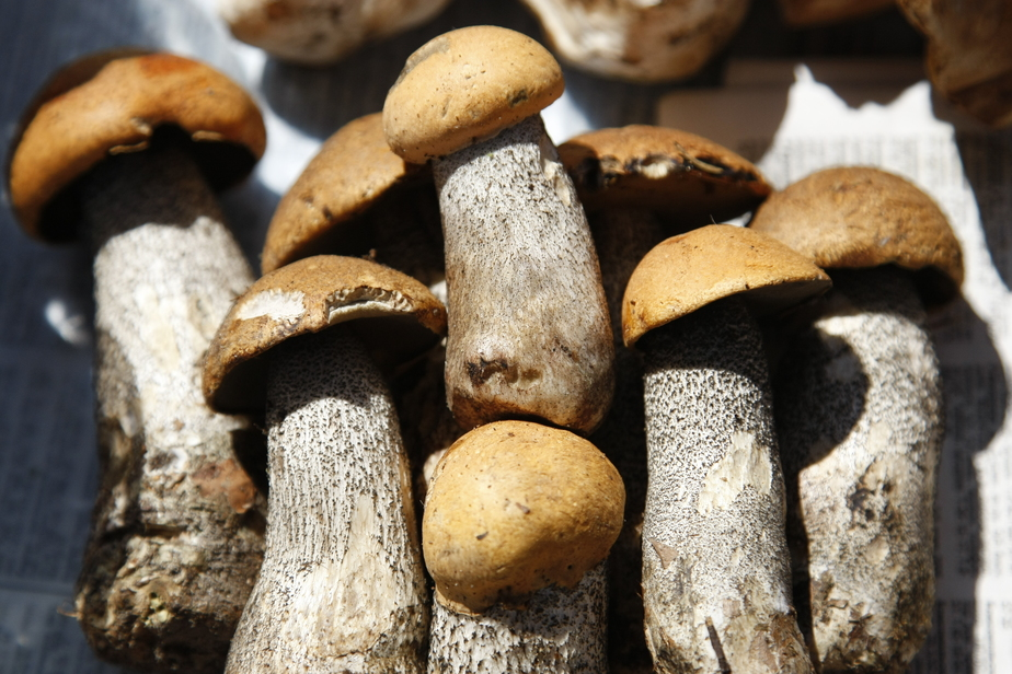 миске грибы в калининградской области фото печать фото