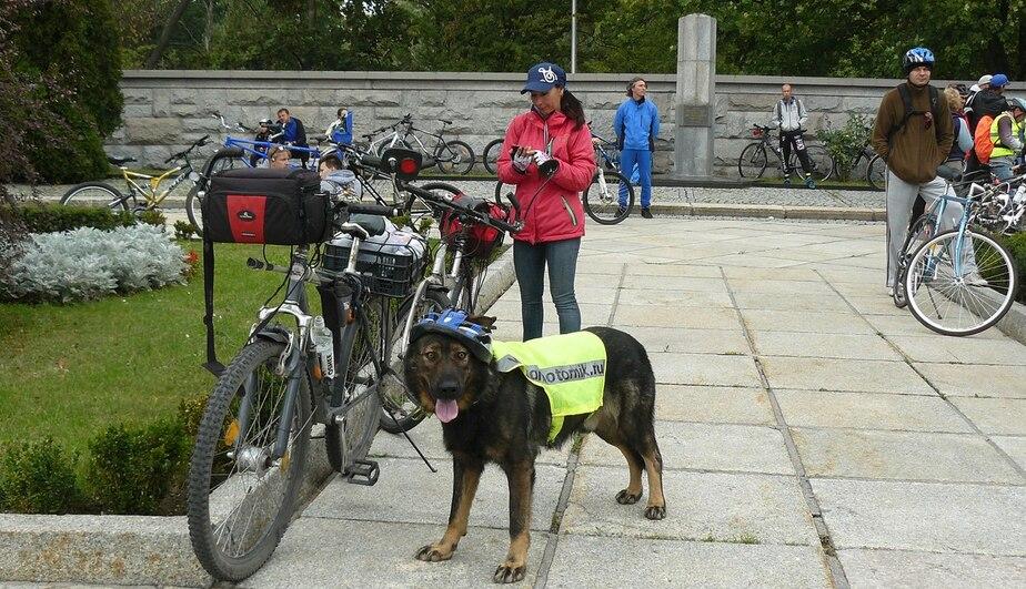 Личный рекорд — 80 км: пёс Боцман в третий раз участвовал в велопробеге Калининград — Зеленоградск  - Новости Калининграда