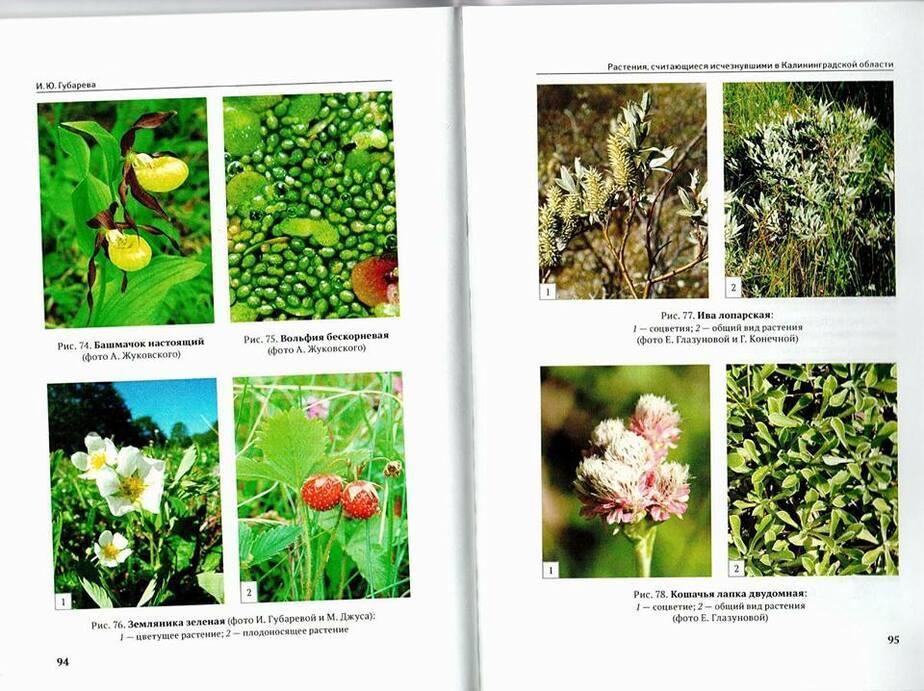 """Парк """"Куршская коса"""" впервые выпустил книгу про редкие и охраняемые виды растений - Новости Калининграда"""