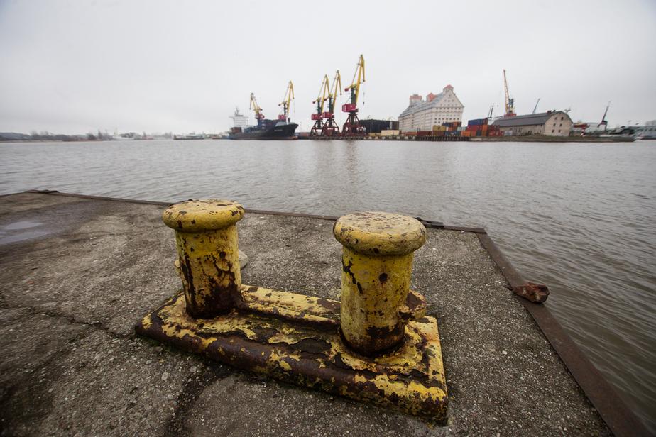 В Калининград не смогли ввезти 24 тонны креветки из Эквадора