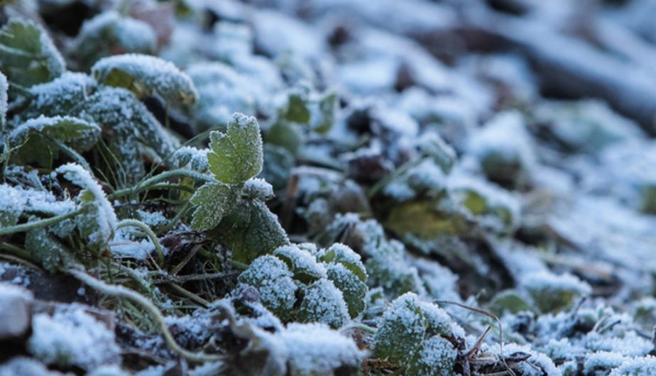 В Польше замёрзли насмерть 26 человек за 4 дня
