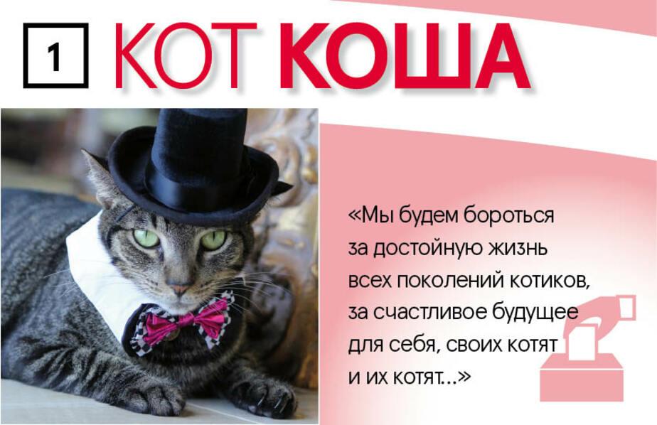 Кандидаты — котики! Калининградцам предложили идею альтернативных выборов - Новости Калининграда