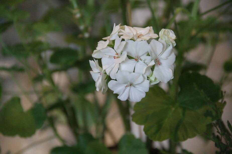 Калининградцам расскажут о лечебных свойствах комнатных растений  - Новости Калининграда