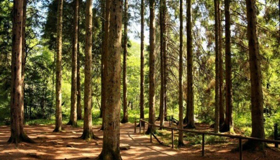 В Литве запретили посещение лесов - Новости Калининграда