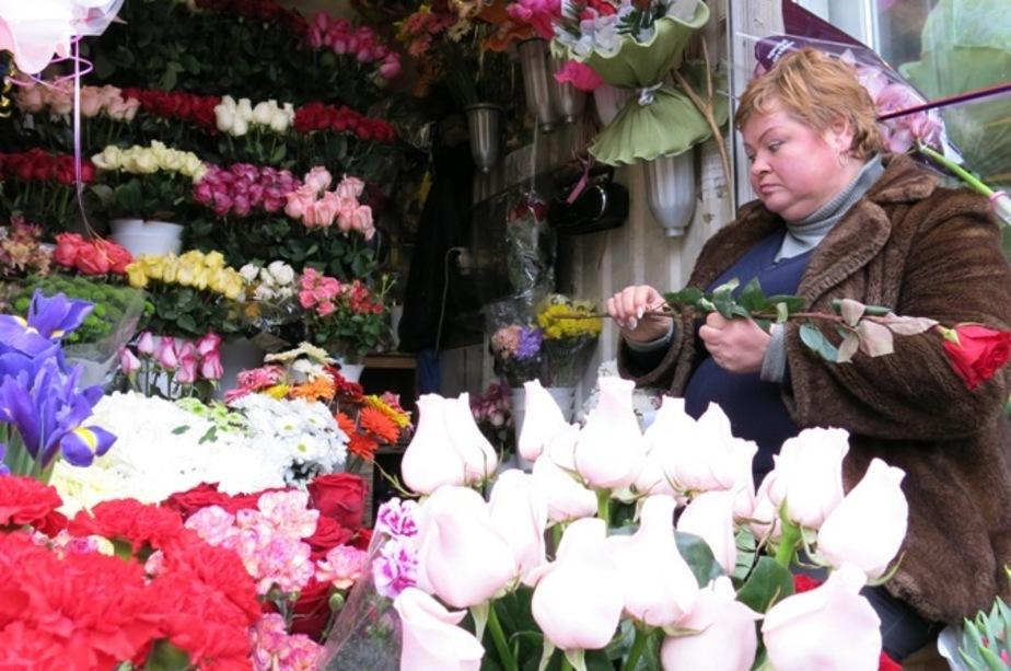 Россия запретила ввозить голландские цветы без экспертизы - Новости Калининграда