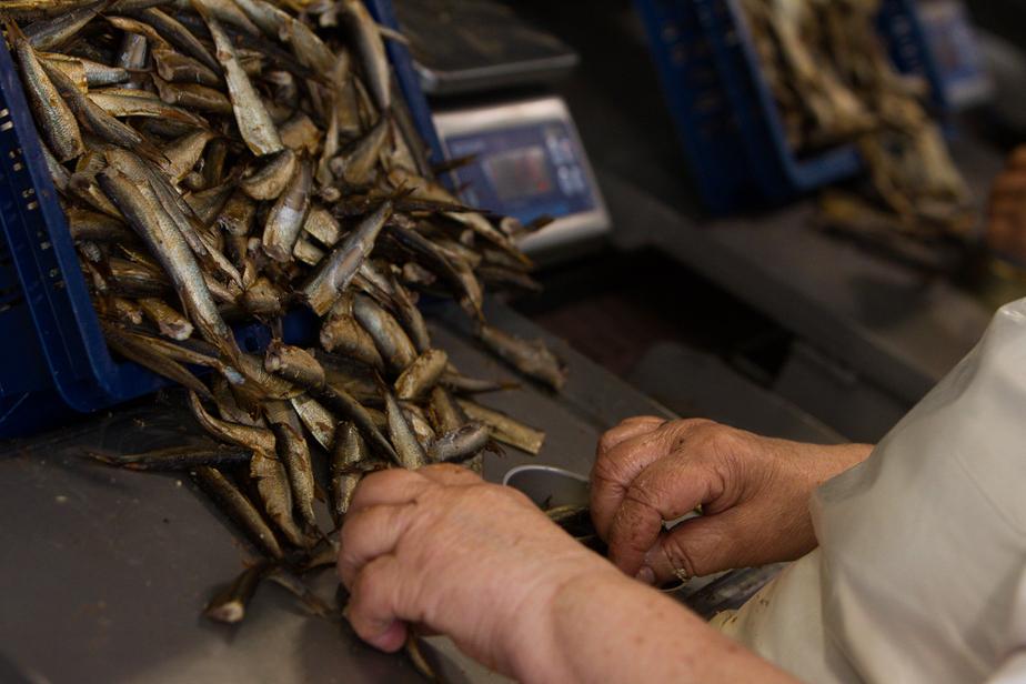 За год вылов рыбы в Балтийском море вырос на 13 тысяч тонн