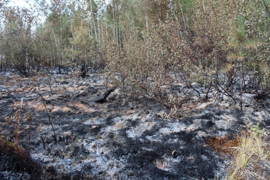 Заповедное болото Целау под Калининградом горит уже почти неделю - Новости Калининграда