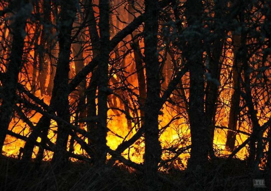 Поджигатель леса на Куршской косе может избежать уголовного наказания из-за амнистии - Новости Калининграда