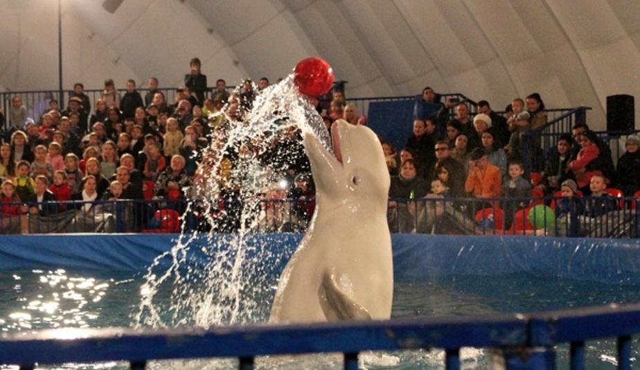 Как подружиться с Эрвином и Глорией: где в Калининграде можно поплавать с дельфинами - Новости Калининграда