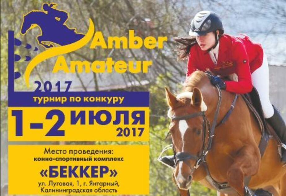 В Янтарном пройдёт открытый турнир по конкуру от Калининградской федерации конного спорта - Новости Калининграда