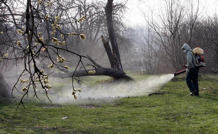 Клещи в Калининградской области по-прежнему активны: ещё 239 пострадавших - Новости Калининграда