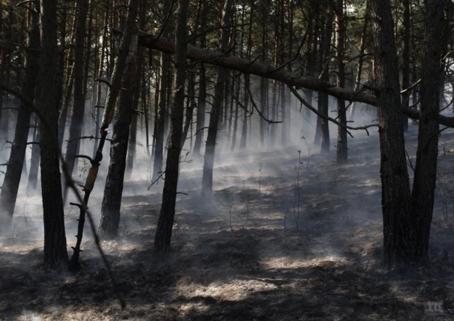 Собственники земель, прилегающих к лесу, с марта должны будут защищать его от пожара - Новости Калининграда