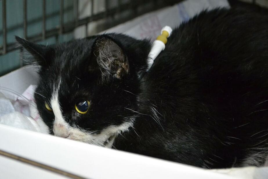 Калининградка бросила умирать свою кошку, упавшую с 8-го этажа