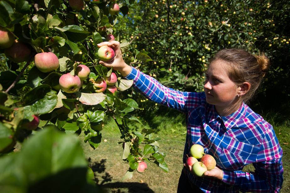Калининградская выпускница вырастила на трех гектарах яблоневый сад - Новости Калининграда