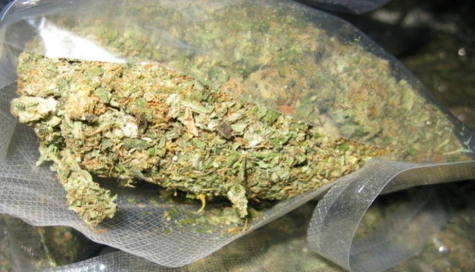 В Германии разрешили использование марихуаны в медицинских целях - Новости Калининграда