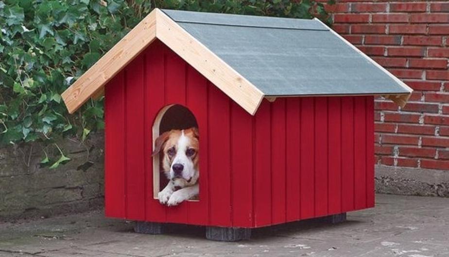 В Калининграде хотят штрафовать владельцев больших собак - Новости Калининграда