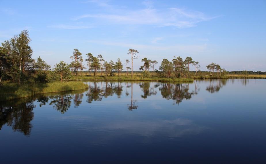 В Калининградском историко-художественном музее открывается выставка о болотах - Новости Калининграда