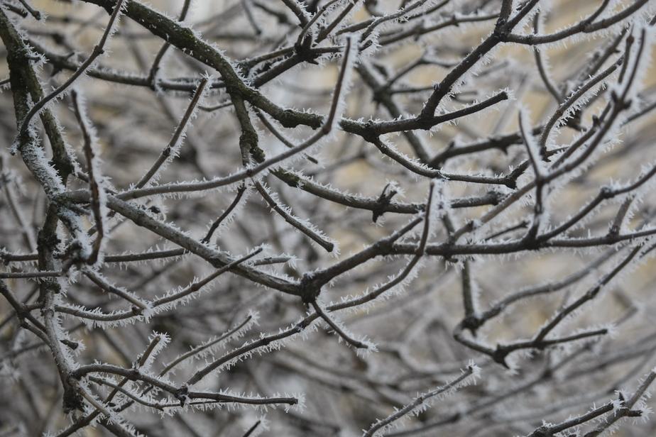 Во вторник в Калининграде ожидается снег - Новости Калининграда