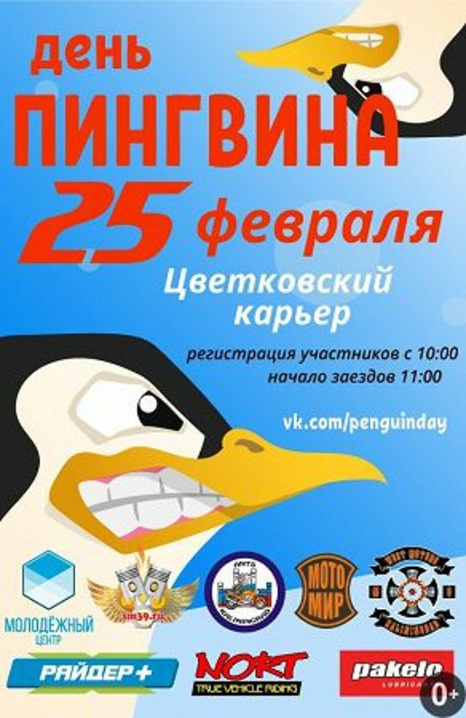 """Группа """"День пингвина 2018"""" / """"ВКонтакте"""""""