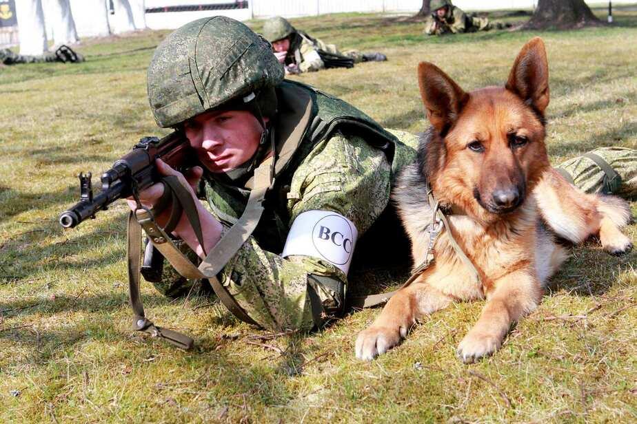 На Балтийском флоте появилось отделение минно-розыскных собак - Новости Калининграда