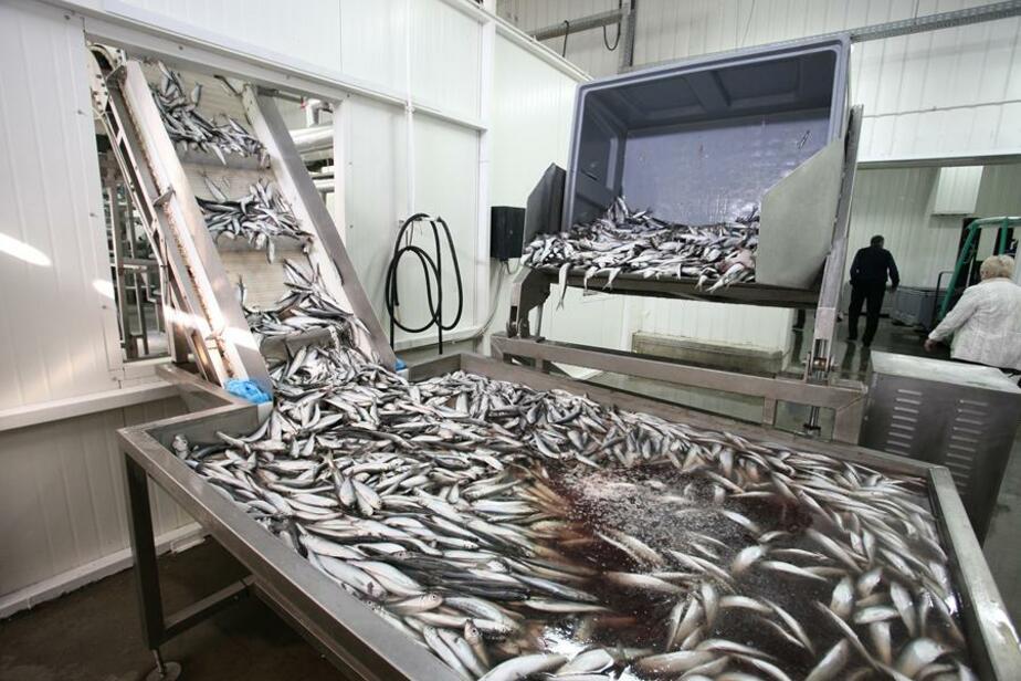 Рыбная промышленность Калининградской области