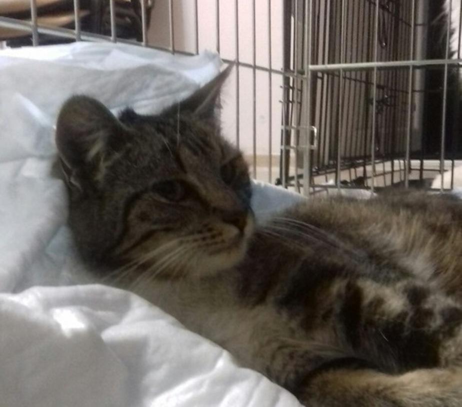 """Кошка Сильвия. Фото: приют """"Дом для одиноких кошек"""""""