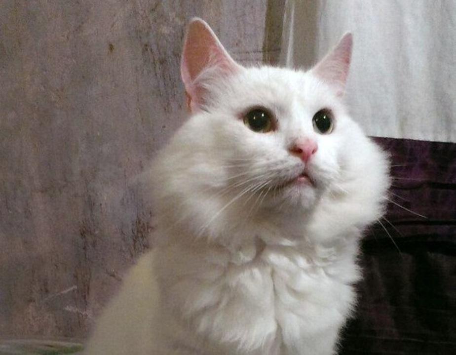 """Кот Исмаил. Фото: приют """"Дом для одиноких кошек"""""""